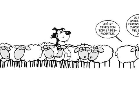 Sintes ovejas y lobo